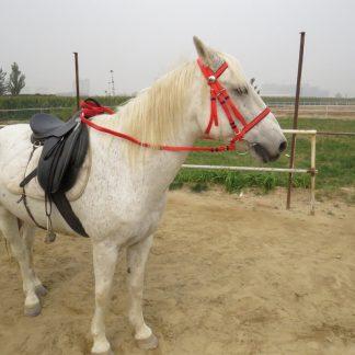 PVC Horse Bridle Horse Riding Equipment Horseback Riding Accessories Equestrian Supplies On A Horse Racing Head Collar Bridle